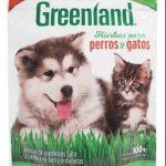 Semillas de hierba para perros y gatos