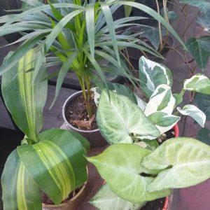 Mini Plantas